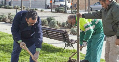 Campaña de reposición de arbolado en Boadilla