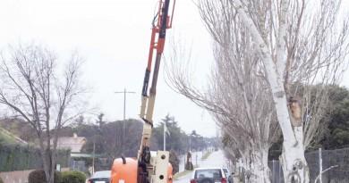 Operarios talando árboles en Boadilla del Monte
