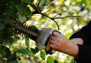 11 detenidos por contratar jardineros ilegalmente para Boadilla