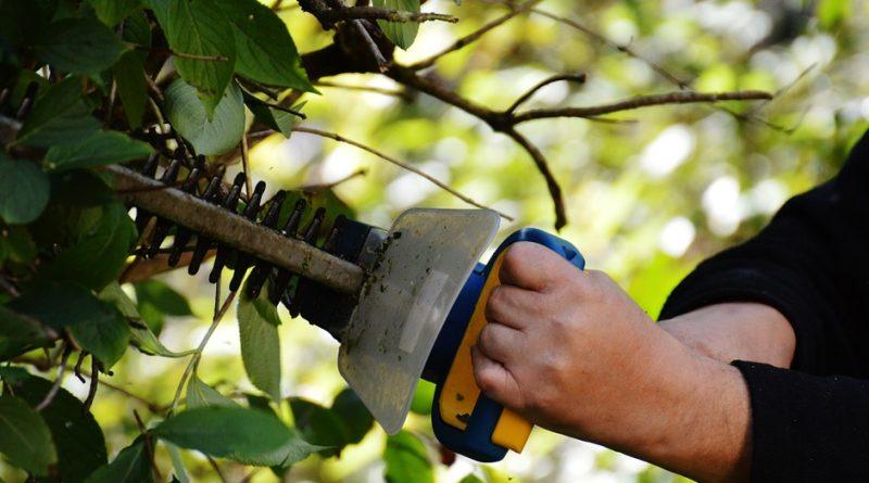 Trabajos de jardineria ilegal en Boadilla