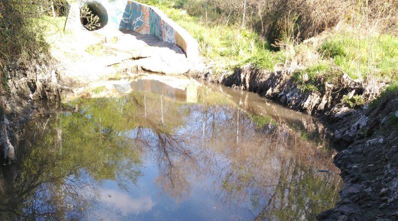 Posible foco de infección en el Arroyo de Vallelargo