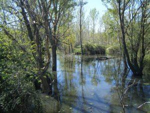 Visita al arroyo de Valchico @ Aula Medioambiental | Boadilla del Monte | Comunidad de Madrid | España