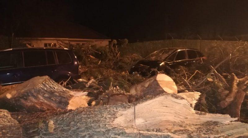 Pino Polideportivo de Boadilla. El árbol cayó sobre varios vehículos aparcados