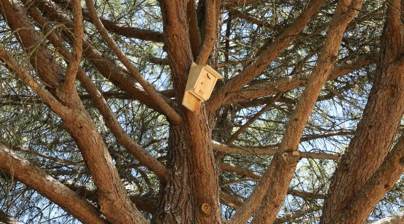 El Ayuntamiento coloca cien cajas-nido para murciélagos con el fin de controlar plagas de insectos