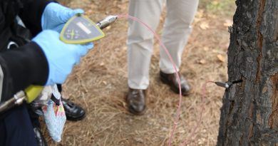 Teleboadilla. Más de 200 pinos han recibido ya tratamiento por endoterapia contra la oruga procesionaria
