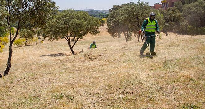 Teleboadilla. Operarios desbrozando y limpiando terrenos para evitar incendios