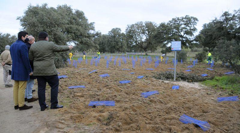 Teleboadilla. Plantación de 30.000 árboles y arbustos en Boadilla del Monte