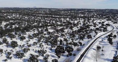 Teleboadilla. Monte de Boadilla después de la nevada de enero de 2021