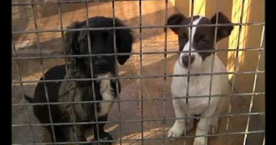 Centro de Protección de Animales