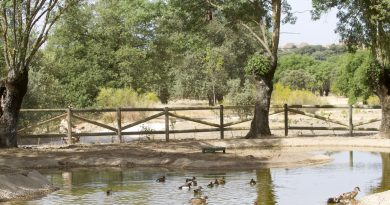 Teleboadilla. Charca de patos Arroyo de la Fresneda en Boadilla del Monte