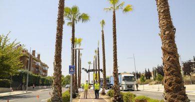 Teleboadilla. El Ayuntamiento comienza a plantar palmeras en la avenida Infante D. Luis