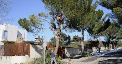 Teleboadilla. Operarios retiran ramas de los árboles después del temporal Filomena