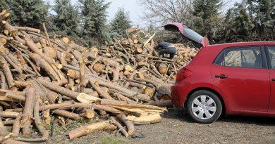 Teleboadilla. Leña de los árboles afectados por el temporal Filomena