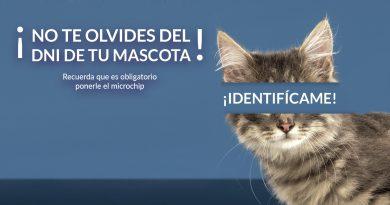 Teleboadilla. El Ayuntamiento inicia una campaña de concienciación para identificar con microchip a todos los animales de compañía