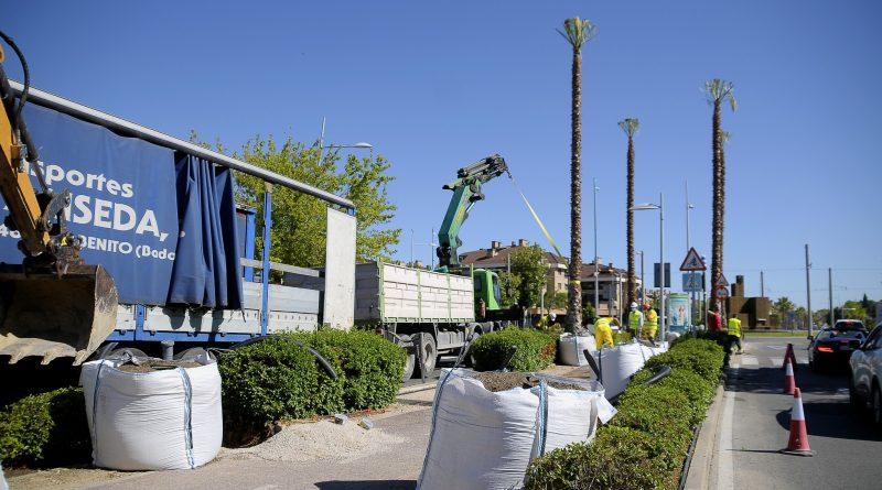eleboadilla. Plantación de nuevas palmeras en Avda. Infante Don Luis de Boadilla del Monte